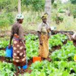camap-Building-Nigeria's-agribusiness-smallholder-farmers-The-AATF-initiative